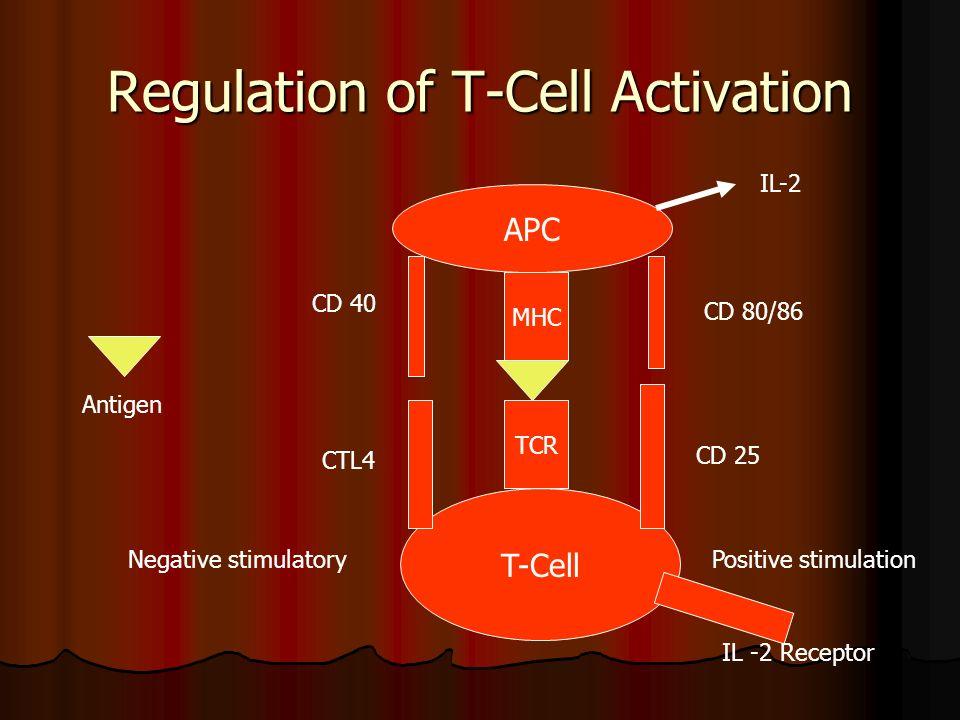Regulation of T-Cell Activation APC T-Cell MHC TCR CD 40 CTL4 Negative stimulatory CD 80/86 CD 25 Positive stimulation IL -2 Receptor IL-2 Antigen