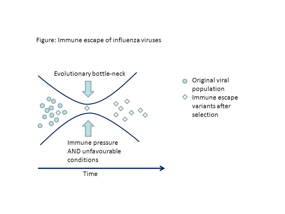 Figure: Immune escape of influenza viruses Original viral population Immune escape variants after selection Immune pressure AND unfavourable condition
