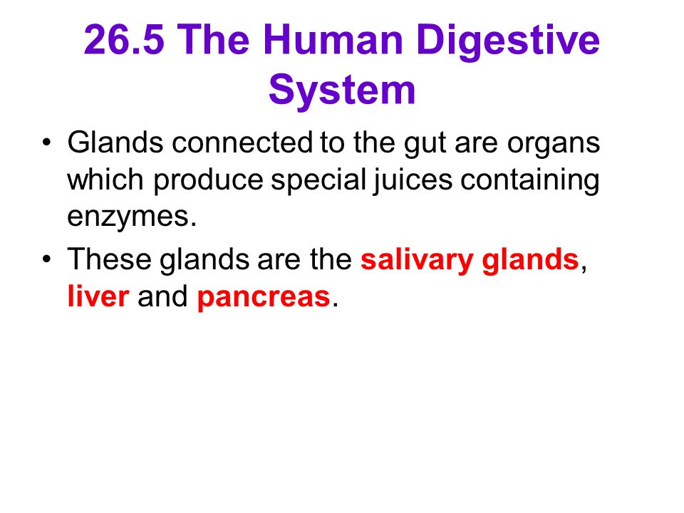 26.5 The Human Digestive System Glands connected to the gut are organs which produce special juices containing enzymes. These glands are the salivary