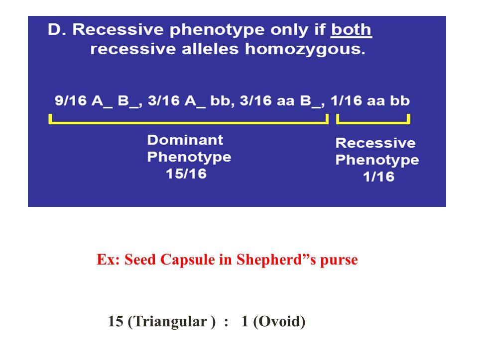 Ex: Seed Capsule in Shepherds purse 15 (Triangular ) : 1 (Ovoid)