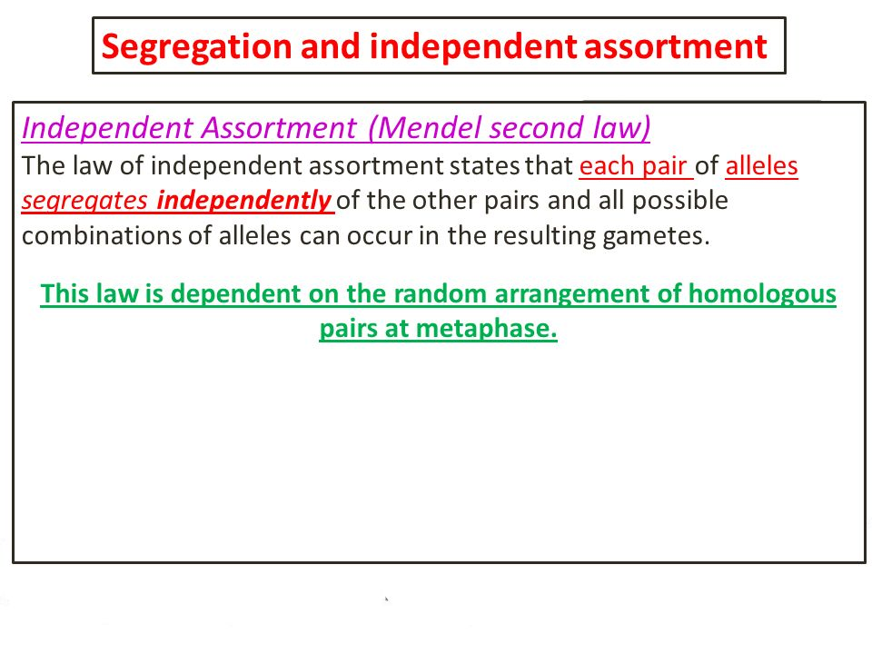 Segregation and independent assortment Independent Assortment (Mendel second law) The law of independent assortment states that each pair of alleles s