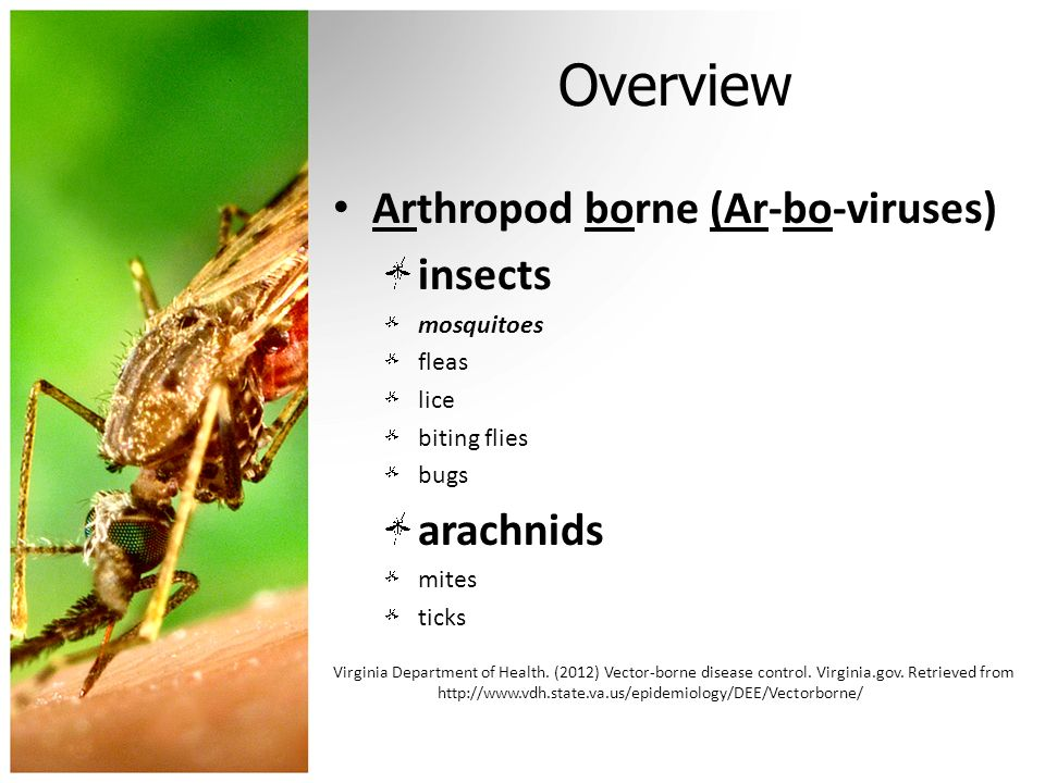 Overview Arthropod borne (Ar-bo-viruses) insects mosquitoes fleas lice biting flies bugs arachnids mites ticks Virginia Department of Health. (2012) V