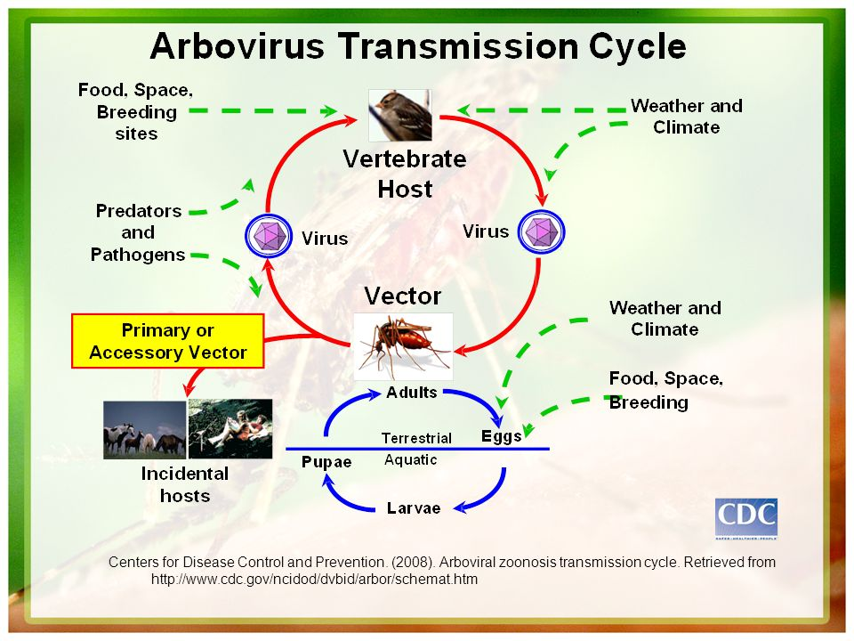 Centers for Disease Control and Prevention. (2008). Arboviral zoonosis transmission cycle. Retrieved from http://www.cdc.gov/ncidod/dvbid/arbor/schema