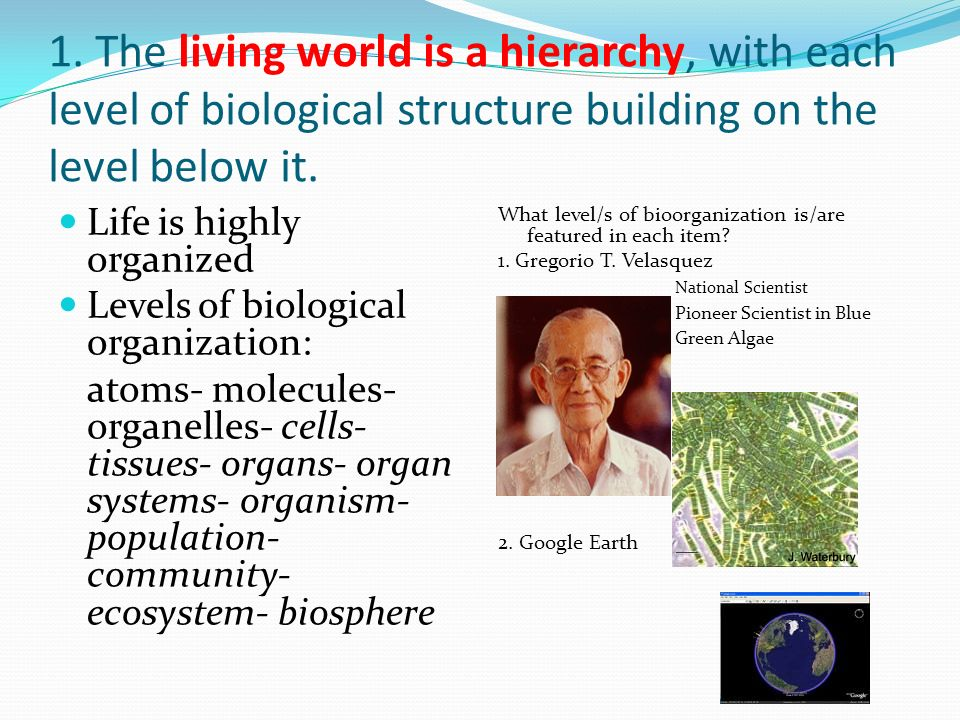 1. The living world is a hierarchy, with each level of biological structure building on the level below it. Life is highly organized Levels of biologi