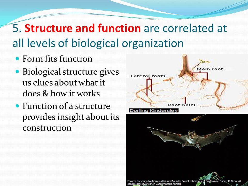 5. Structure and function are correlated at all levels of biological organization Form fits function Biological structure gives us clues about what it