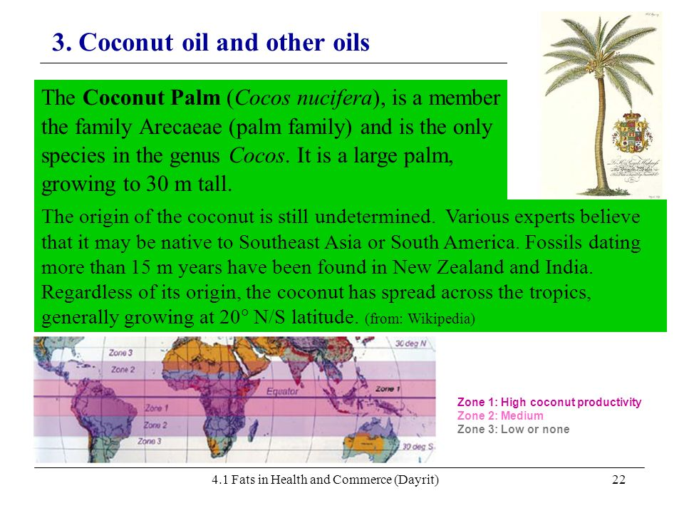 4.1 Fats in Health and Commerce (Dayrit)22 3. Coconut oil and other oils The Coconut Palm (Cocos nucifera), is a member of the family Arecaeae (palm f