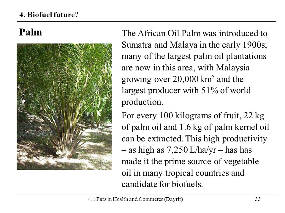4.1 Fats in Health and Commerce (Dayrit)33 4. Biofuel future? Palm The African Oil Palm was introduced to Sumatra and Malaya in the early 1900s; many