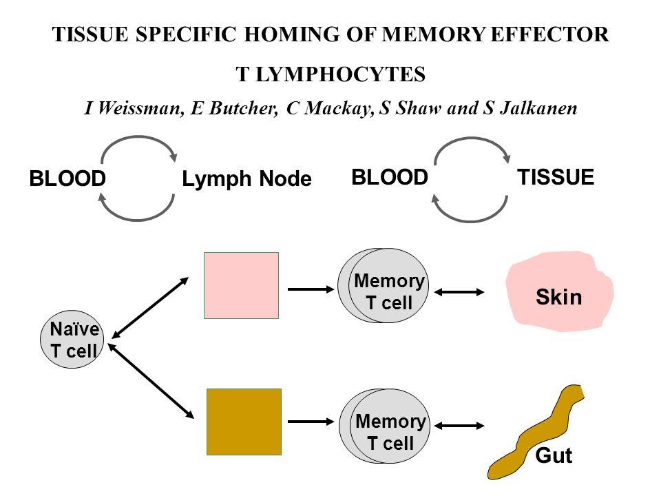BLOOD TISSUE Lymph Node BLOOD Naïve T cell Memory T cell Skin Gut I Weissman, E Butcher, C Mackay, S Shaw and S Jalkanen TISSUE SPECIFIC HOMING OF MEM