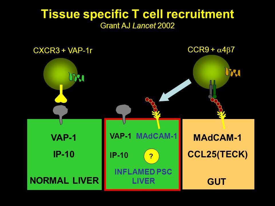 Tissue specific T cell recruitment Grant AJ Lancet 2002 CXCR3 + VAP-1r VAP-1 IP-10 MAdCAM-1 CCL25(TECK) NORMAL LIVER GUT CCR9 + 4 7 VAP-1 MAdCAM-1 IP-