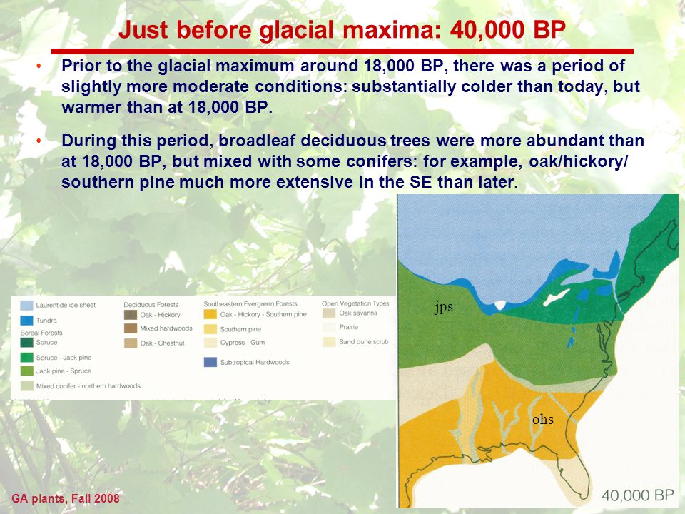GA plants, Fall 2008 Just before glacial maxima: 40,000 BP Prior to the glacial maximum around 18,000 BP, there was a period of slightly more moderate conditions: substantially colder than today, but warmer than at 18,000 BP.