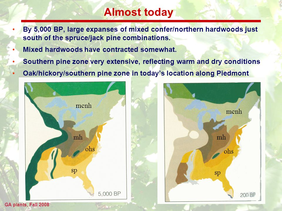 GA plants, Fall 2008 Almost today By 5,000 BP, large expanses of mixed confer/northern hardwoods just south of the spruce/jack pine combinations.