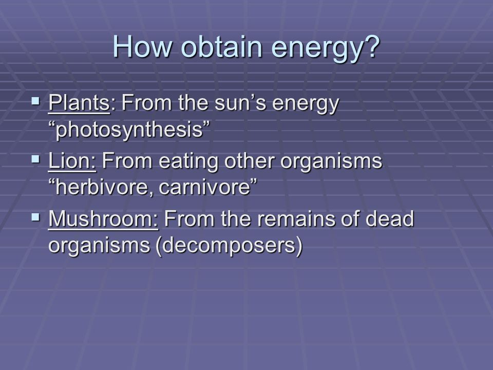 How obtain energy? Plants: From the suns energy photosynthesis Plants: From the suns energy photosynthesis Lion: From eating other organisms herbivore