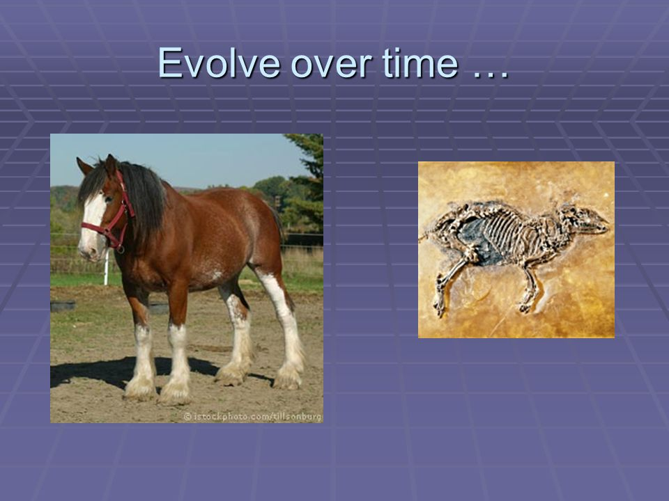 Evolve over time …