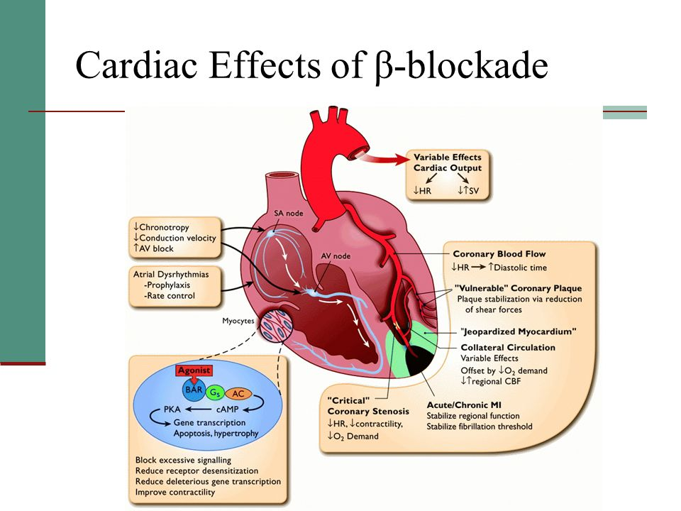 Cardiac Effects of β-blockade