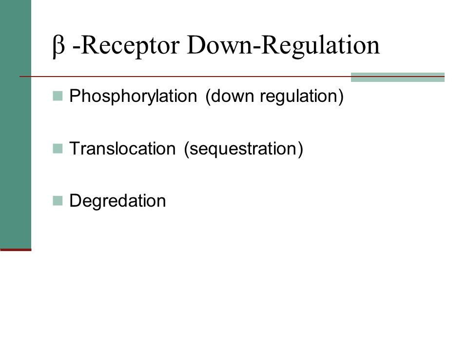 β -Receptor Down-Regulation Phosphorylation (down regulation) Translocation (sequestration) Degredation
