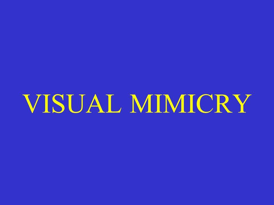VISUAL MIMICRY