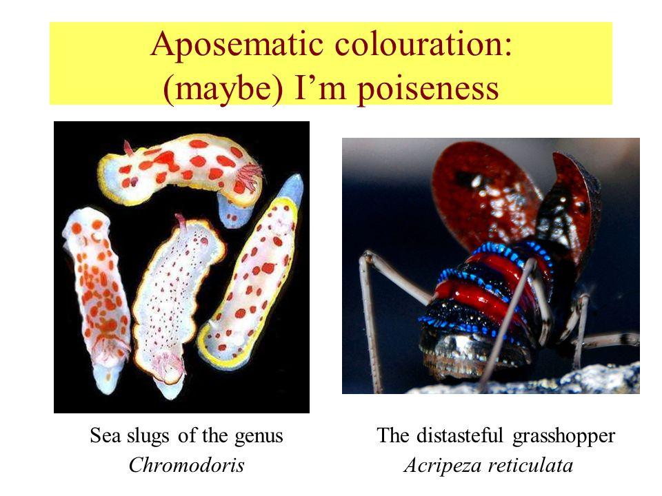 Aposematic colouration: (maybe) Im poiseness Sea slugs of the genus The distasteful grasshopper Chromodoris Acripeza reticulata