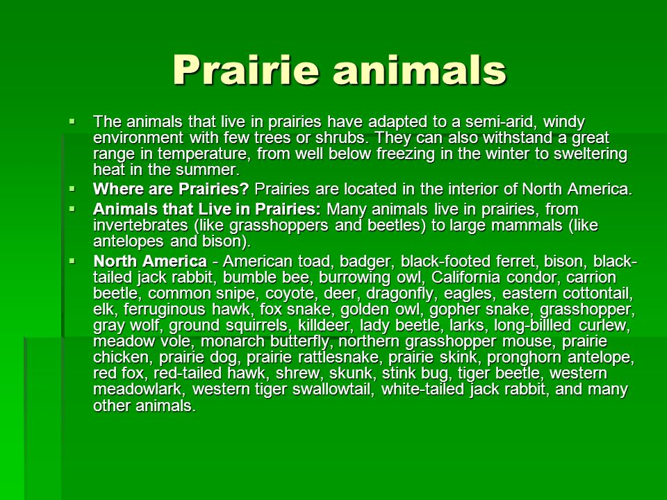 Prairie animals The animals that live in prairies have adapted to a semi-arid, windy environment with few trees or shrubs. They can also withstand a g
