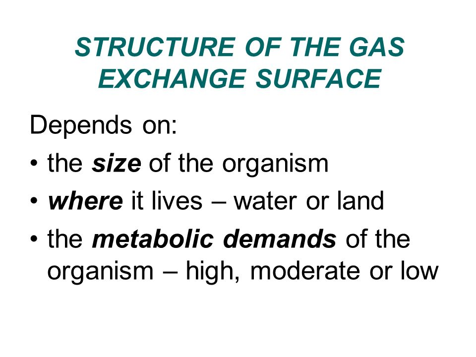 TYPES OF GAS EXCHANGE SURFACE