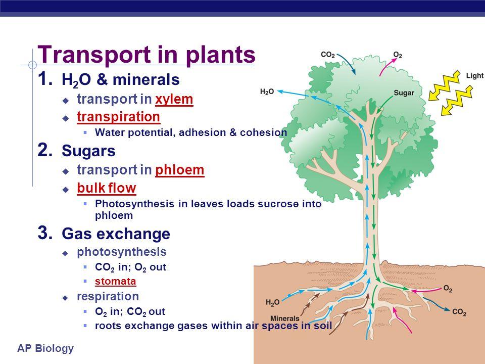 AP Biology 2006-2007 Transport in Plants