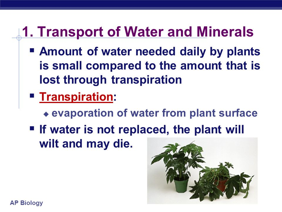 AP Biology Overview Sugars travel from leaves to roots through phloem Water and dissolved minerals travel from root to shoot through xylem It defies g