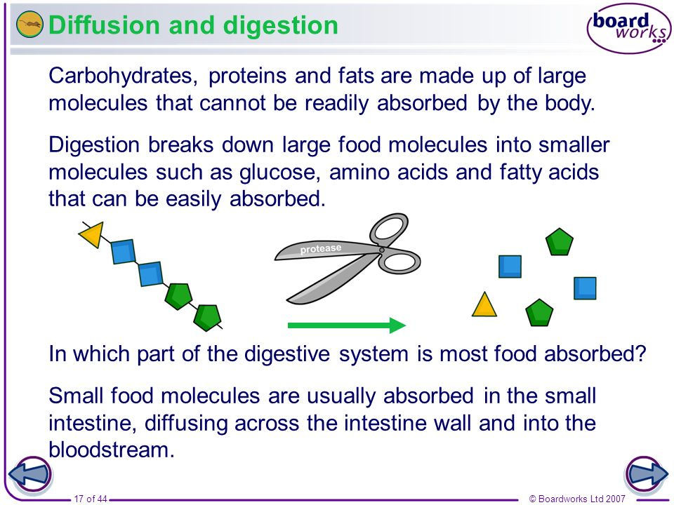 © Boardworks Ltd 200717 of 44 Diffusion and digestion Digestion breaks down large food molecules into smaller molecules such as glucose, amino acids a