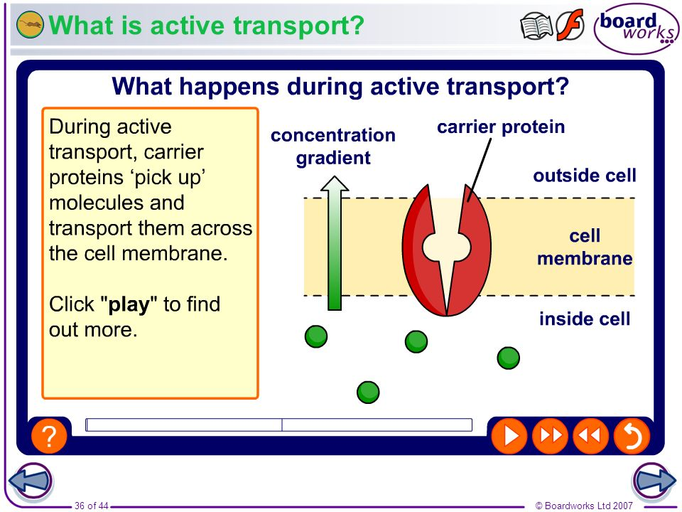 © Boardworks Ltd 200736 of 44 What is active transport?