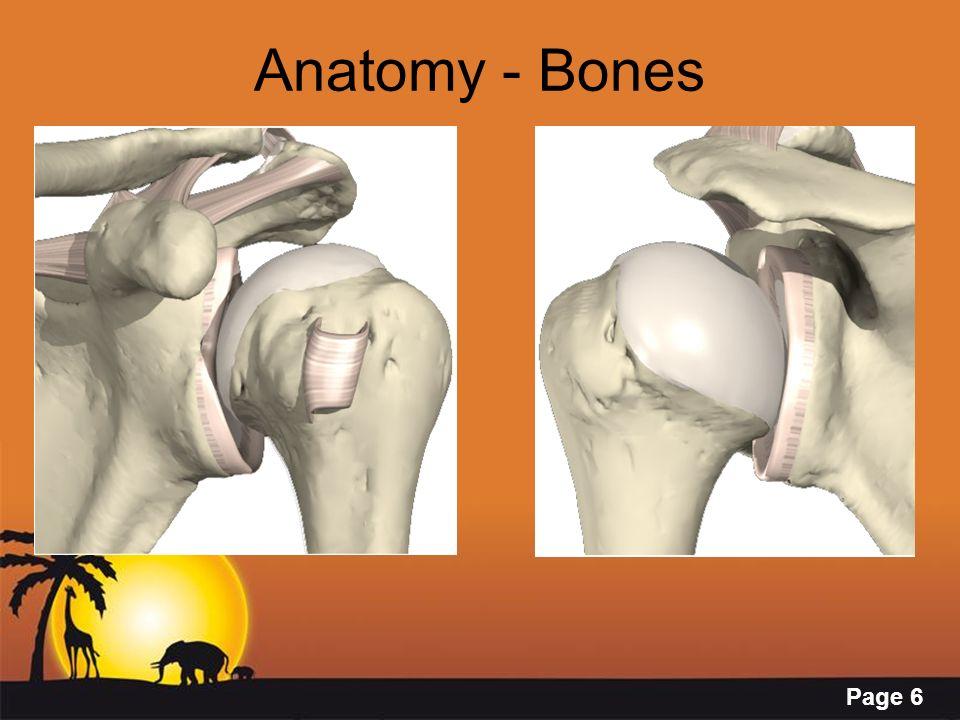 Page 6 Anatomy - Bones