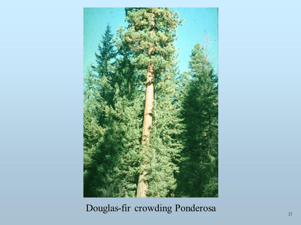 25 Douglas-fir crowding Ponderosa