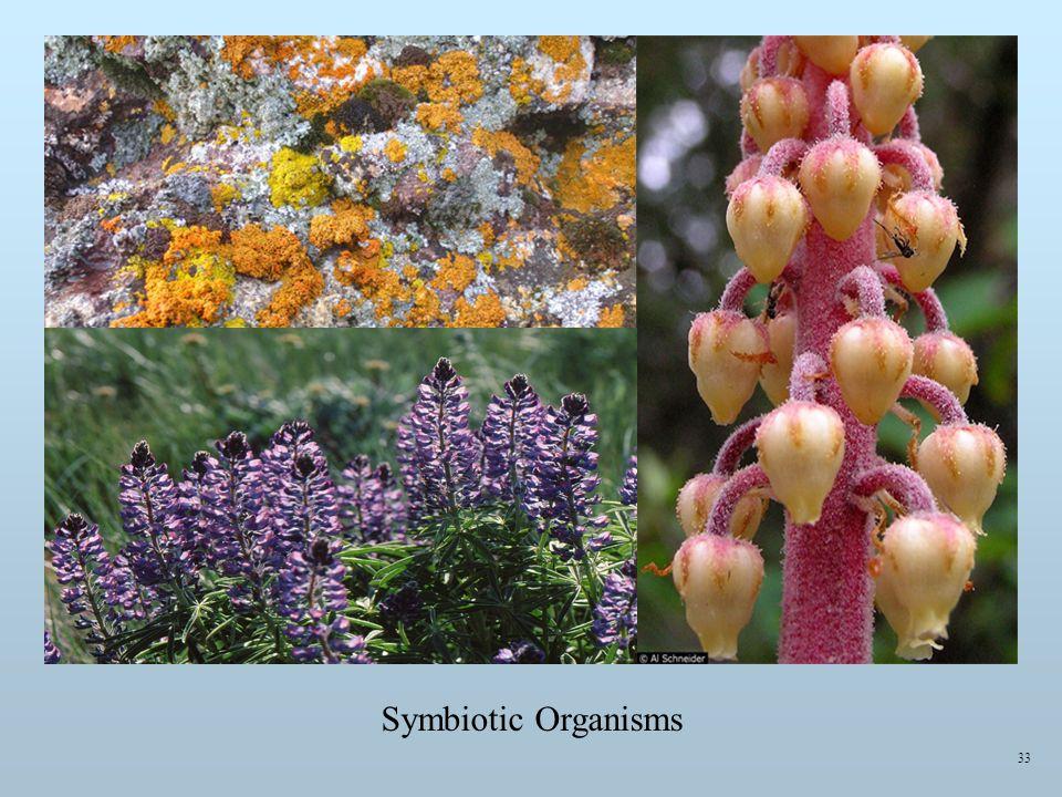 33 Symbiotic Organisms