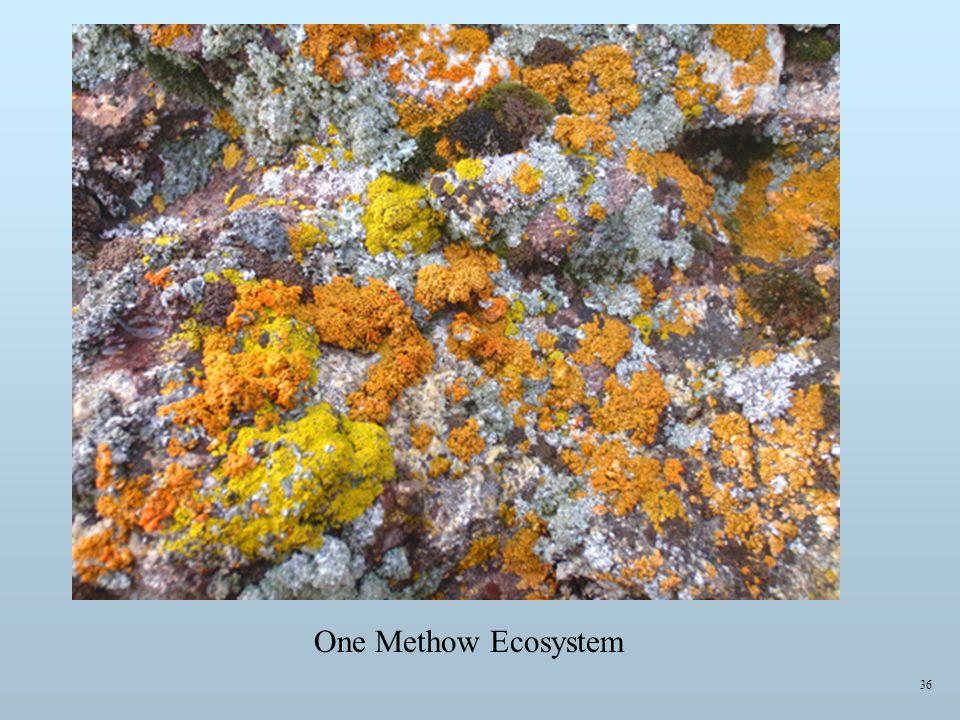 One Methow Ecosystem 36
