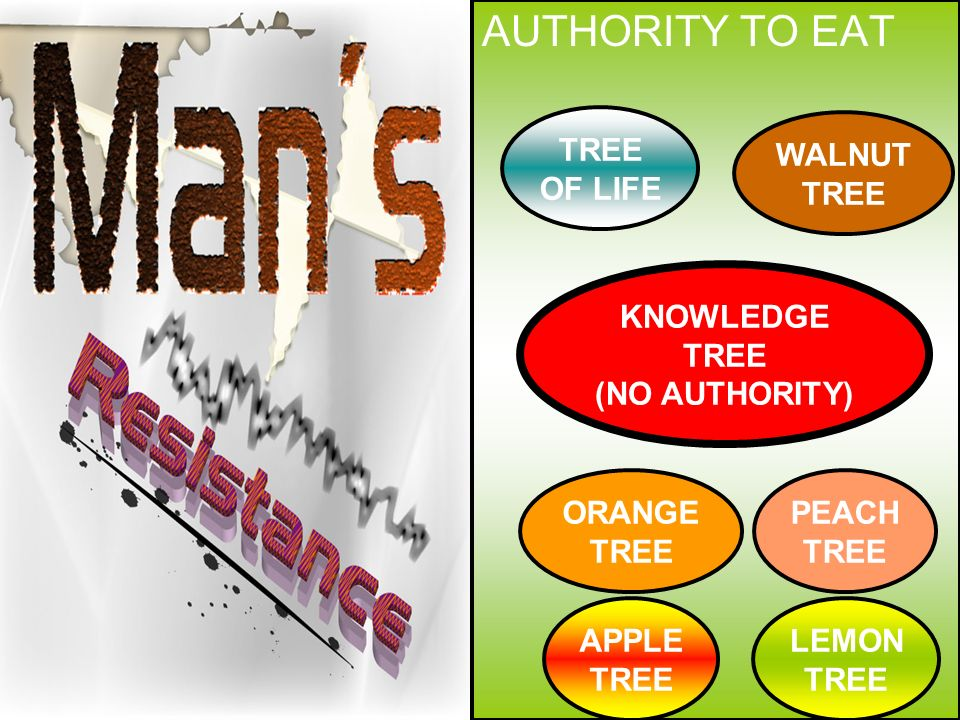 AUTHORITY TO EAT KNOWLEDGE TREE (NO AUTHORITY) TREE OF LIFE ORANGE TREE PEACH TREE APPLE TREE WALNUT TREE LEMON TREE