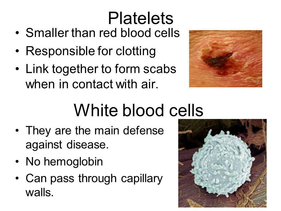 Platelets Smaller than red blood cells Responsible for clotting Link together to form scabs when in contact with air. White blood cells They are the m