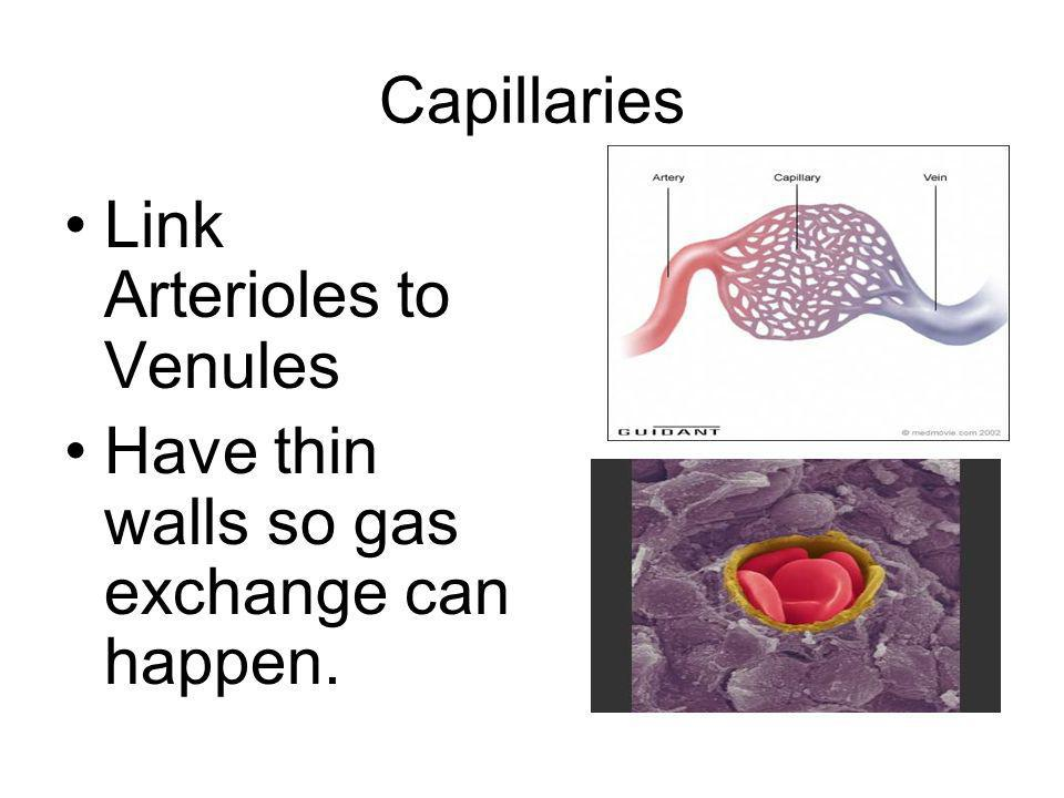 Capillaries Link Arterioles to Venules Have thin walls so gas exchange can happen.