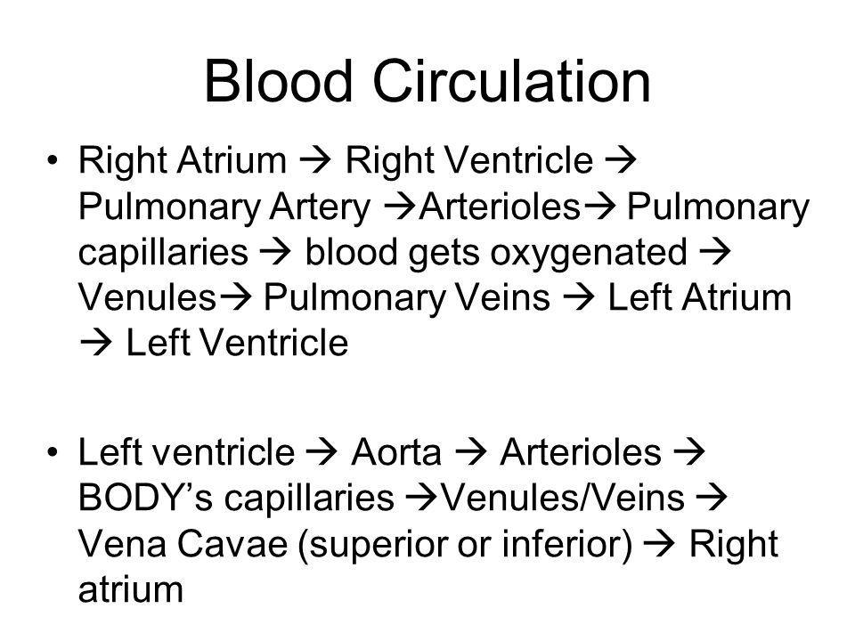 Blood Circulation Right Atrium Right Ventricle Pulmonary Artery Arterioles Pulmonary capillaries blood gets oxygenated Venules Pulmonary Veins Left At