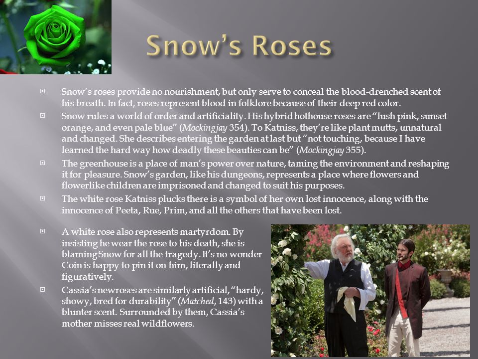 Snows roses provide no nourishment, but only serve to conceal the blood-drenched scent of his breath. In fact, roses represent blood in folklore becau