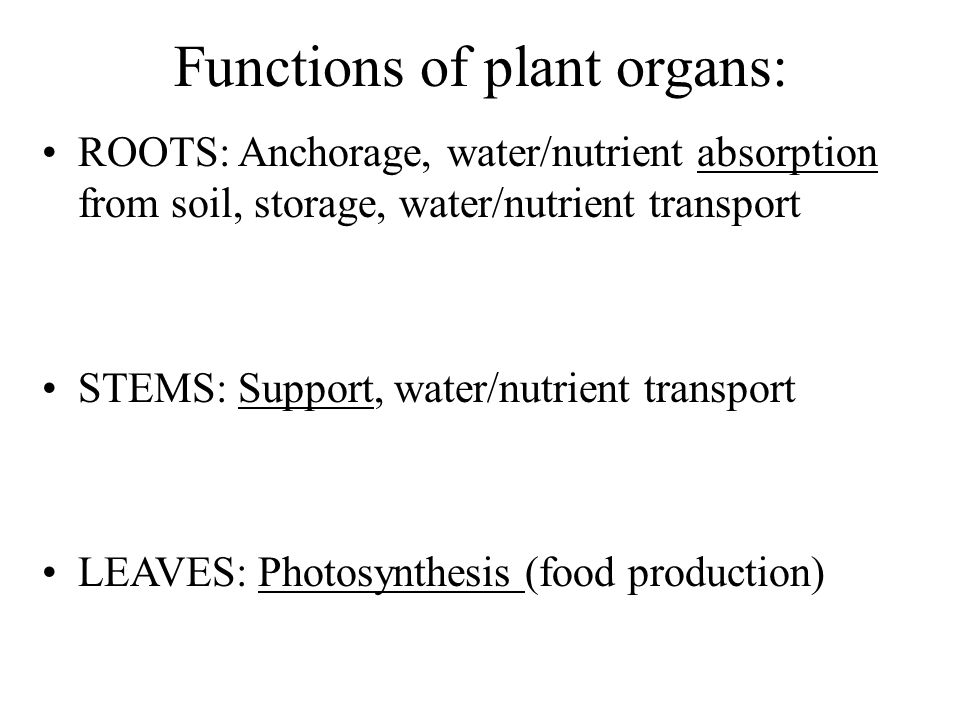 Functions of plant organs: ROOTS: Anchorage, water/nutrient absorption from soil, storage, water/nutrient transport STEMS: Support, water/nutrient tra