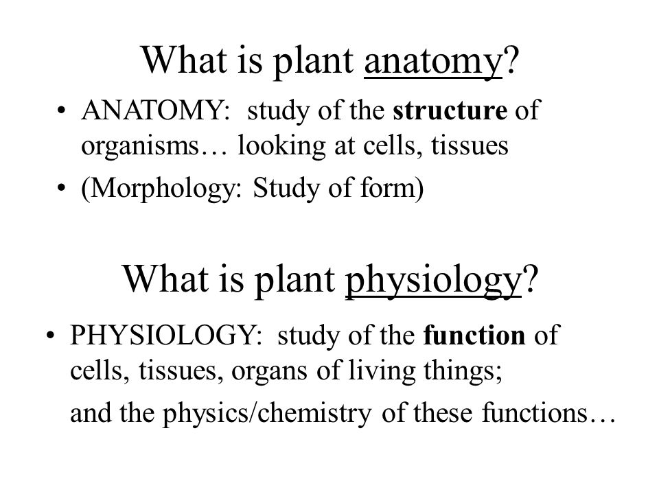What is plant anatomy? ANATOMY: study of the structure of organisms… looking at cells, tissues (Morphology: Study of form) What is plant physiology? P