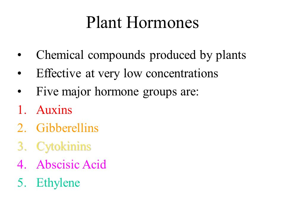 Plant Hormones Chemical compounds produced by plants Effective at very low concentrations Five major hormone groups are: 1.Auxins 2.Gibberellins 3.Cyt