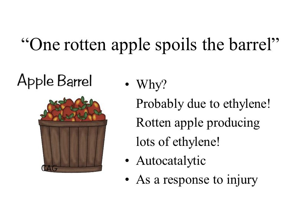One rotten apple spoils the barrel Why? Probably due to ethylene! Rotten apple producing lots of ethylene! Autocatalytic As a response to injury