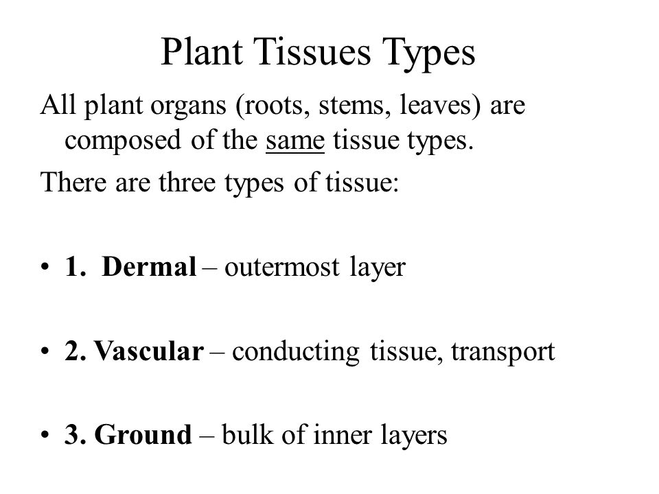 Plant Tissues Types All plant organs (roots, stems, leaves) are composed of the same tissue types. There are three types of tissue: 1. Dermal – outerm