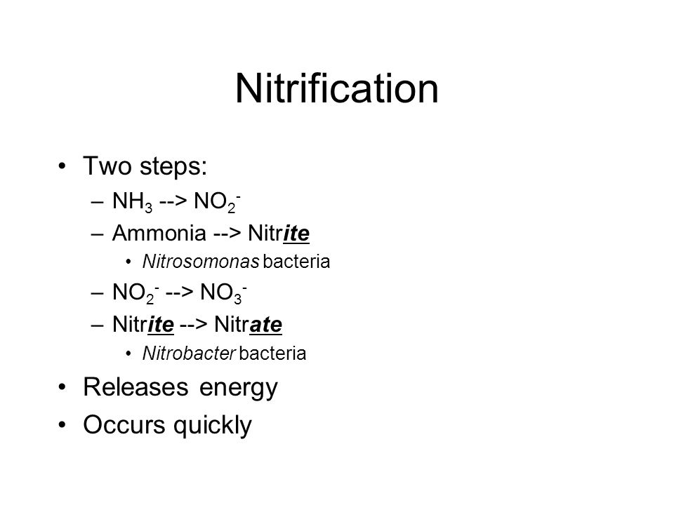 Nitrification Two steps: –NH 3 --> NO 2 - –Ammonia --> Nitrite Nitrosomonas bacteria –NO 2 - --> NO 3 - –Nitrite --> Nitrate Nitrobacter bacteria Releases energy Occurs quickly