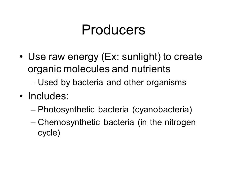 Producers Use raw energy (Ex: sunlight) to create organic molecules and nutrients –Used by bacteria and other organisms Includes: –Photosynthetic bact