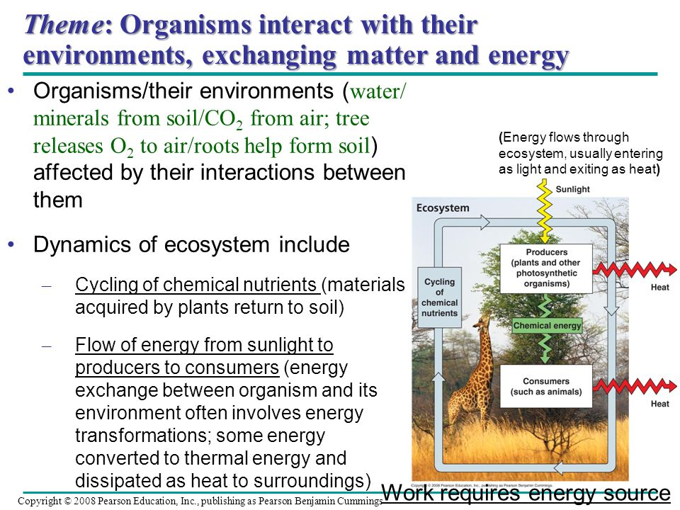 Theme: Organisms interact with their environments, exchanging matter and energy Organisms/their environments ( water/ minerals from soil/CO 2 from air