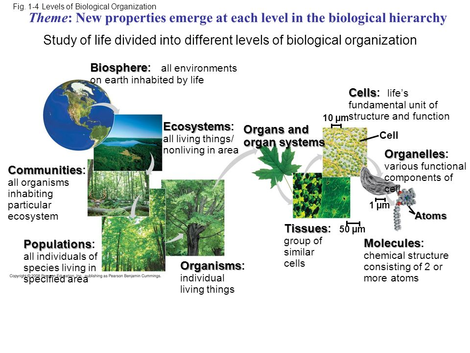 Fig. 1-4 Levels of Biological Organization Biosphere Biosphere: all environments on earth inhabited by life Communities Communities: all organisms inh