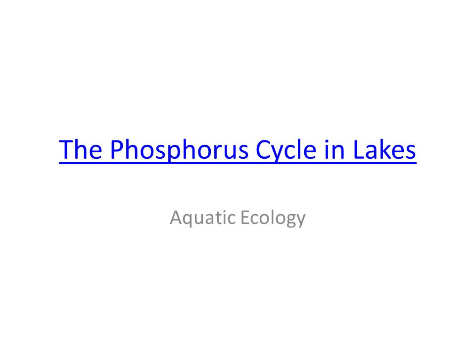 The Phosphorus Cycle in Lakes Aquatic Ecology