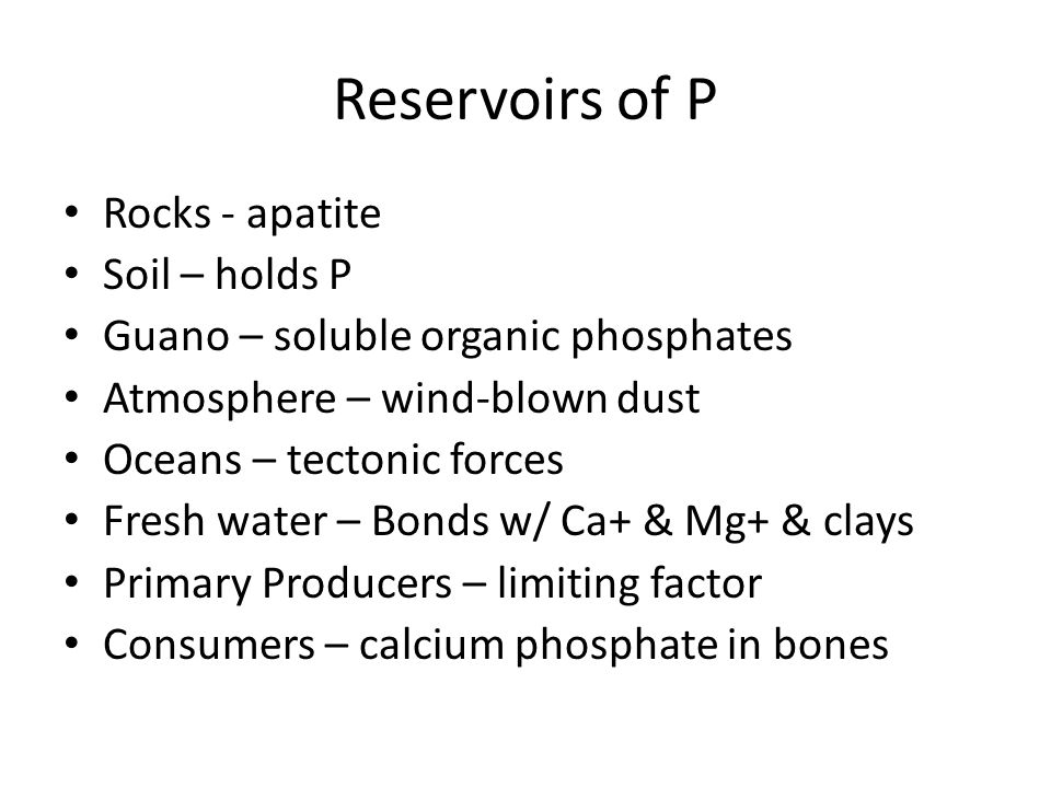 Reservoirs of P Rocks - apatite Soil – holds P Guano – soluble organic phosphates Atmosphere – wind-blown dust Oceans – tectonic forces Fresh water –
