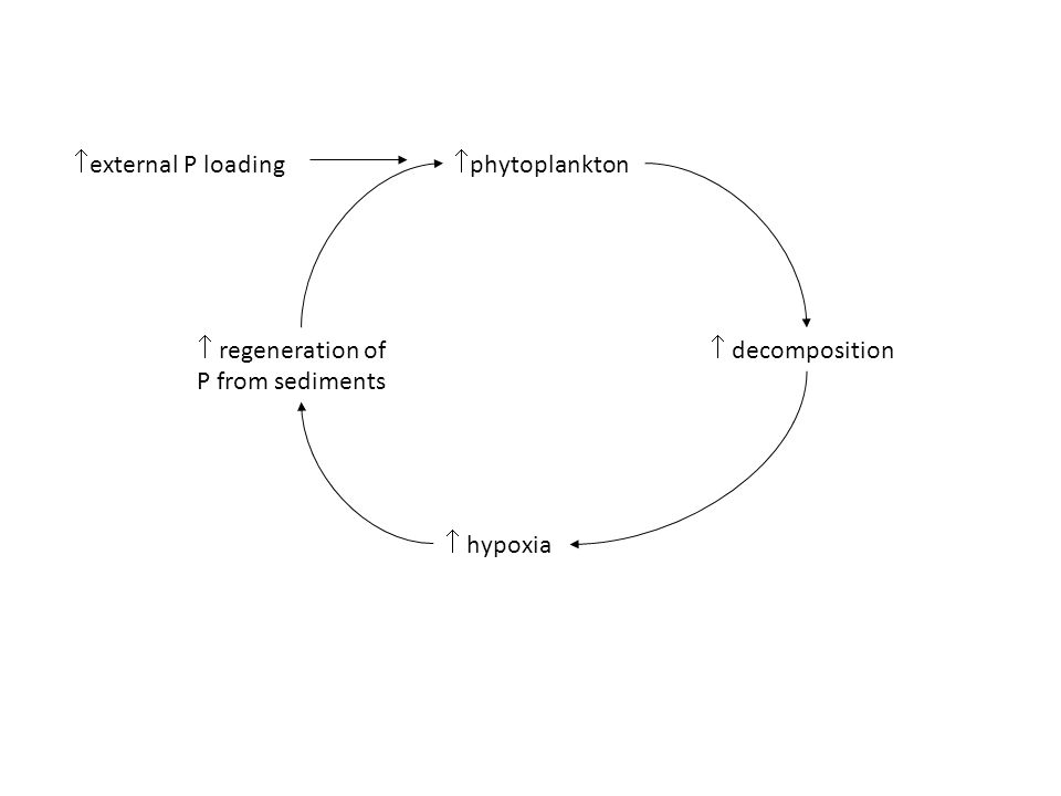 phytoplankton decomposition hypoxia regeneration of P from sediments external P loading