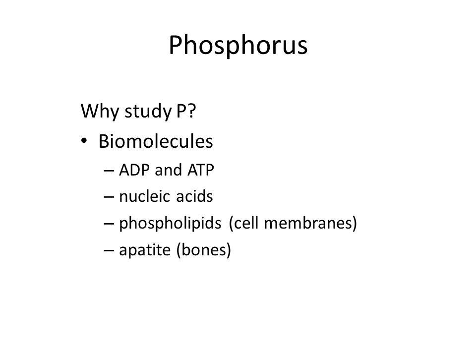 Phosphorus Why study P? Biomolecules – ADP and ATP – nucleic acids – phospholipids (cell membranes) – apatite (bones)