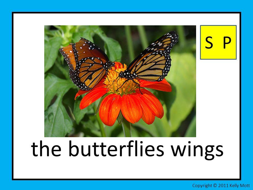 the butterflies wings S P Copyright © 2011 Kelly Mott